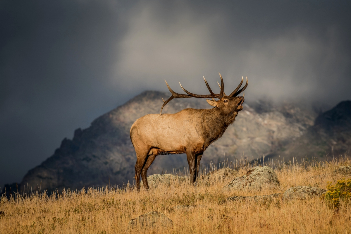 How To Plan A Colorado Elk Hunt | The Complete Guide